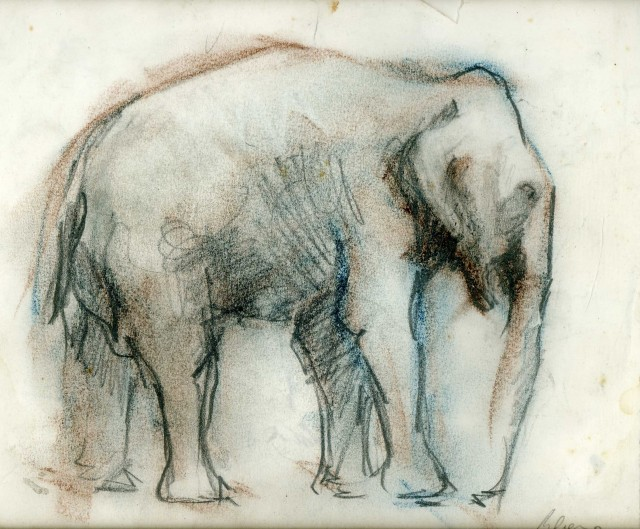 Rebeca Muñoz Carrilero - Art Work - elefante