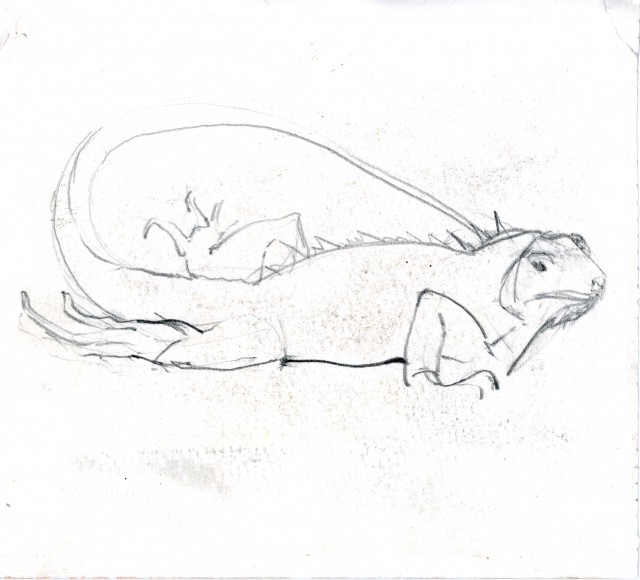 Rebeca Muñoz Carrilero - Art Work - iguana